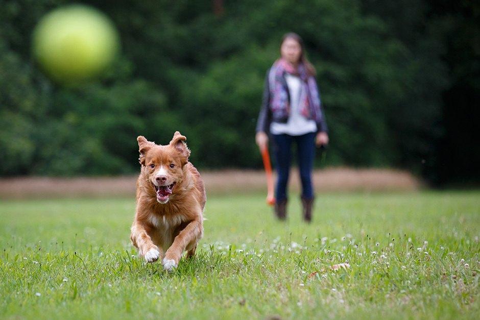 Jardines-para-casas-con-mascotas-consejos