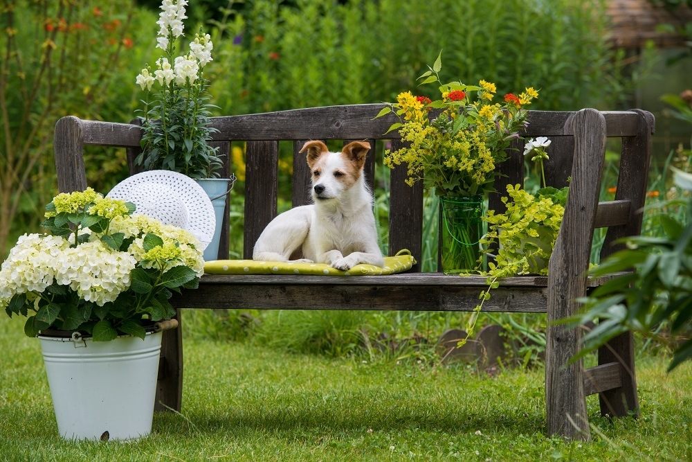 Jardines-para-casas-con-mascotas