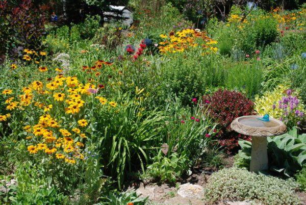10-consejos-para-un-jardin-bonito-y-saludable