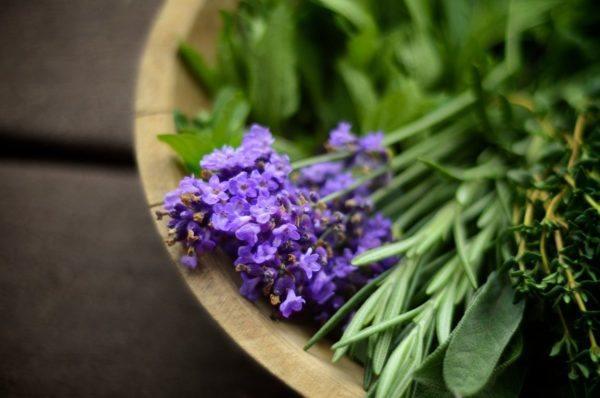 10-consejos-para-un-jardin-bonito-y-saludable-control-de-plagas