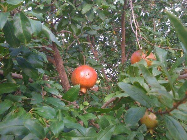 10-consejos-para-un-jardin-bonito-y-saludable-cuidado-arboles-frutales