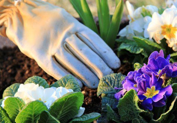 10-consejos-para-un-jardin-bonito-y-saludable-cuidar-las-flores
