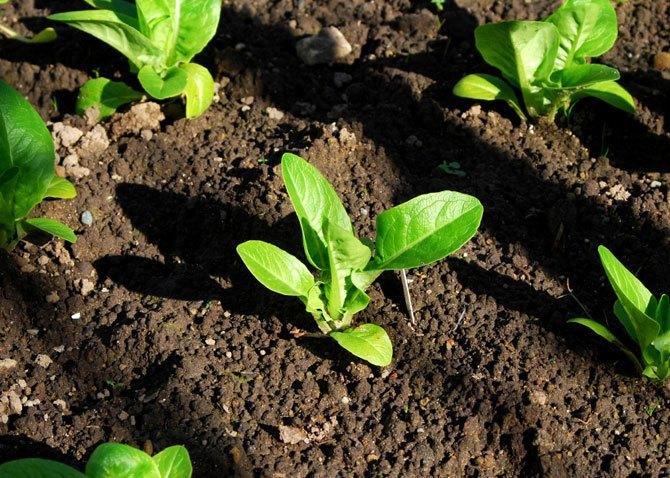 10 consejos para un jardin bonito y saludable plantas for Tierra para jardin