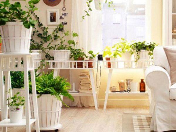formas-de-decorar-con-plantas-cubos