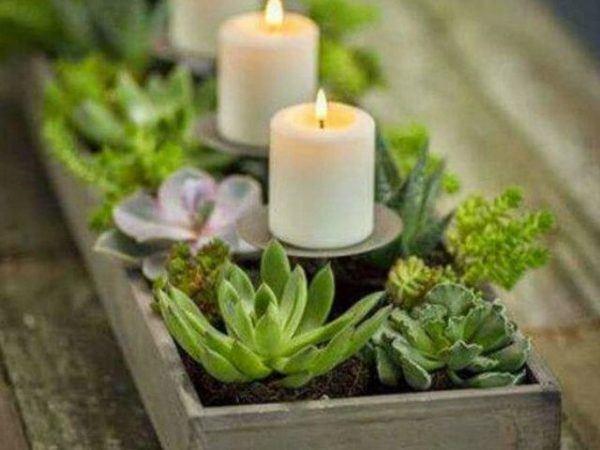 formas-de-decorar-con-plantas-portavela