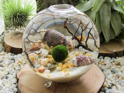 formas-de-decorar-la-casa-con-plantas-de-interior-acuario-lleno