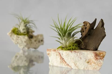 formas-de-decorar-la-casa-con-plantas-de-interior-aereas-o-roca