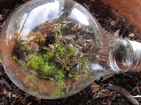 formas-de-decorar-la-casa-con-plantas-de-interior-bombilla