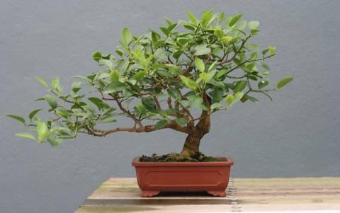 formas-de-decorar-la-casa-con-plantas-de-interior-bonsai