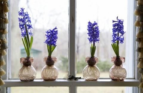 formas-de-decorar-la-casa-con-plantas-de-interior-bulbo-artificial
