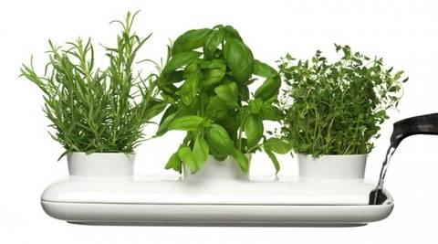 formas-de-decorar-la-casa-con-plantas-de-interior-hierbas-aromaticas