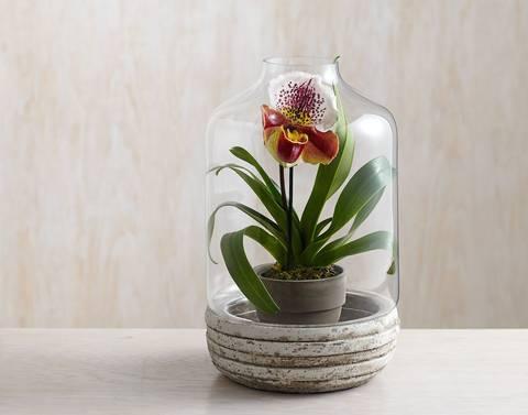 formas-de-decorar-la-casa-con-plantas-de-interior-jarron