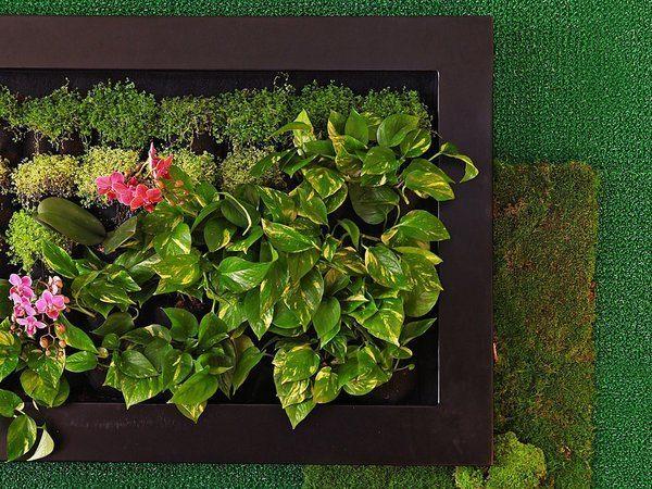 27 bonitas formas de decorar la casa con plantas de for Plantas verticales de interior