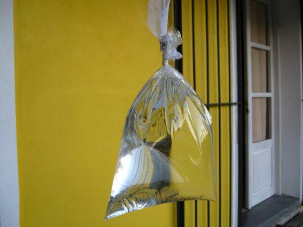matamoscas-casero-bolsas-de-agua