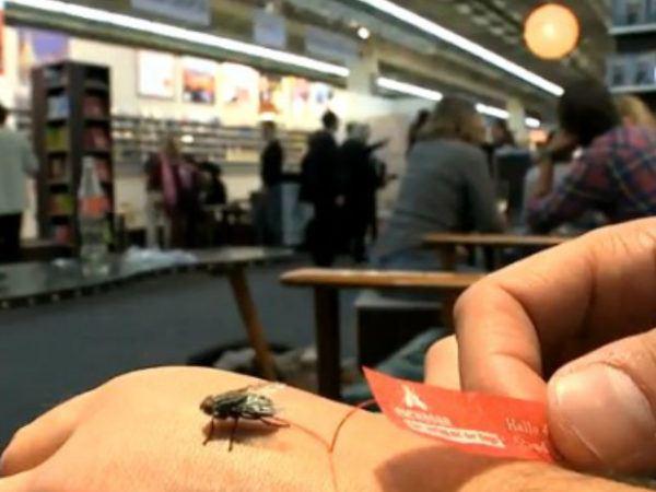 matamoscas-casero-mosca