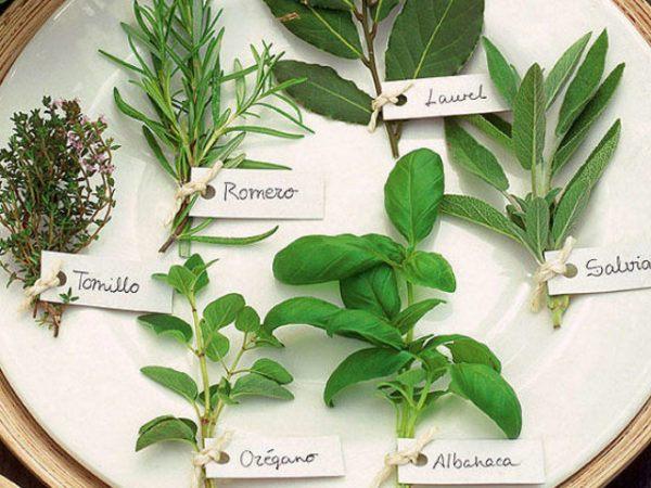 matamoscas-casero-plantas-aromáticas