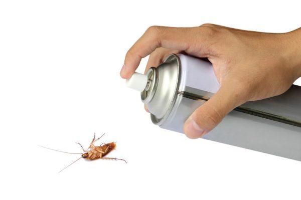 acido-borico-contra-las-cucarachas-insecticida