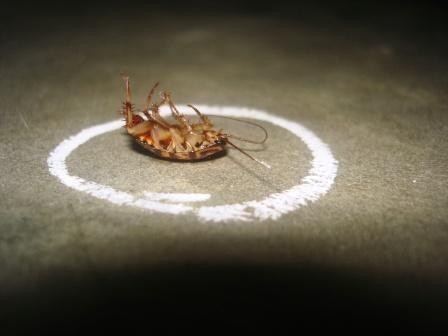 acido-borico-contra-las-cucarachas-muerte