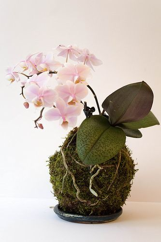 como-hacer-kokedamas-flor