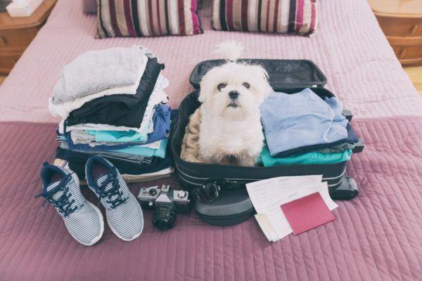Como hacer una maleta perro .verano