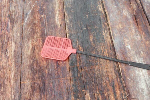 Trampas caseras mosquitos y moscas matamoscas