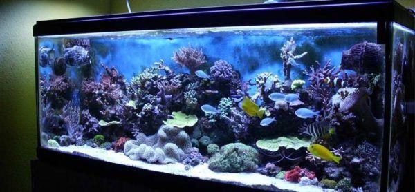 Consejos para decorar un acuario con materiales reciclados - Decoracion acuario marino ...