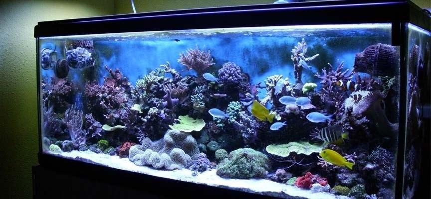 Bricolaje 10 consejos para decorar un acuario con materiales reciclados bricolaje 10 - Acuario en casa ...