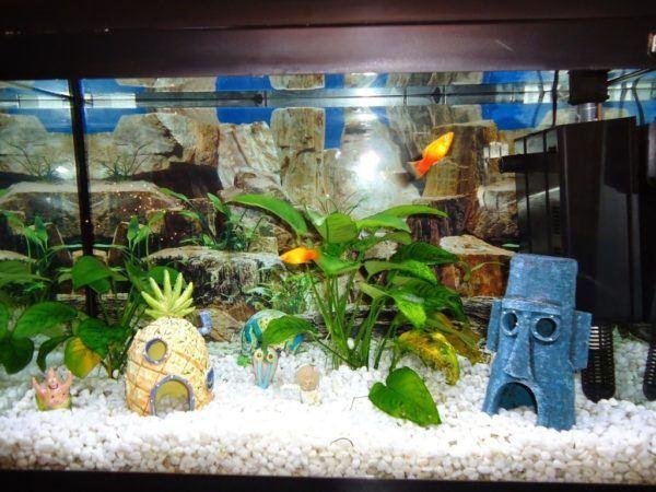 Consejos para decorar un acuario con materiales reciclados - Peceras para casa ...