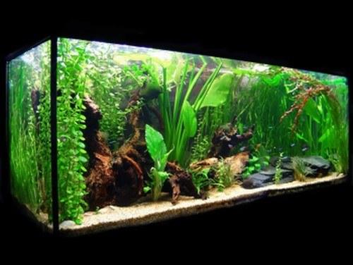 Consejos para decorar un acuario con materiales reciclados for Lista de peces tropicales para acuarios