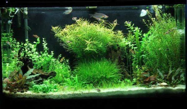 Consejos para decorar un acuario con materiales reciclados for Peces artificiales para acuarios