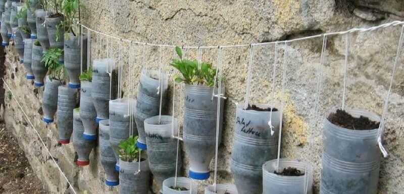 Ideas para hacer macetas con garrafas de agua en una pared