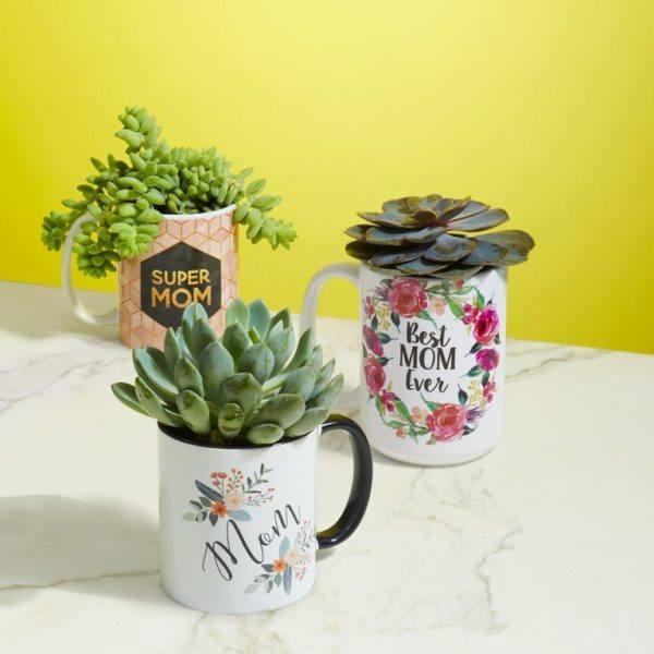 Las mejores ideas para decorar la casa en el Día de la Madre taza con cactus
